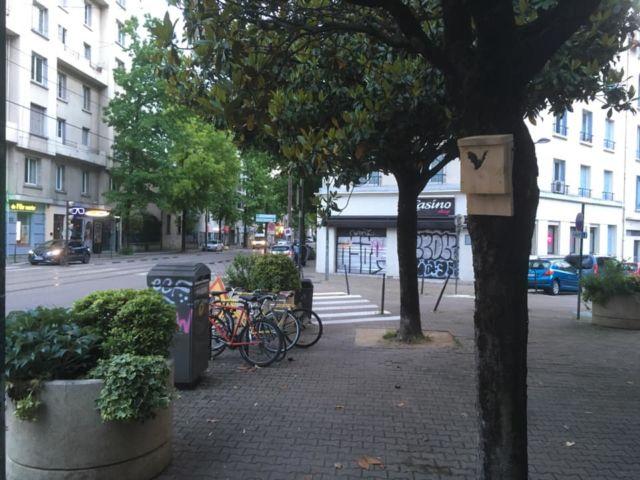 Un gîte à chauve-souris dans Grenoble @ Gilles Namur
