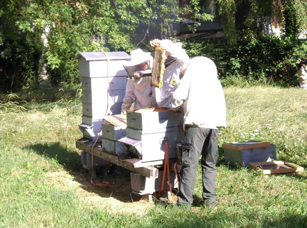 Récolte de miel au parc Jean-Verlhac de Grenoble. © Florent Mathieu - Place Gre'net