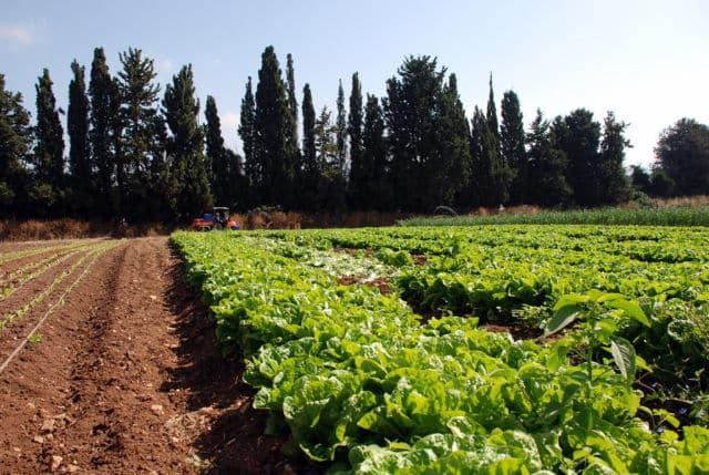 En état d'alerte renforcée sécheresse, les agriculteurs doivent réduire de 30 % leur consommation d'eau pour l'irrigation. DR
