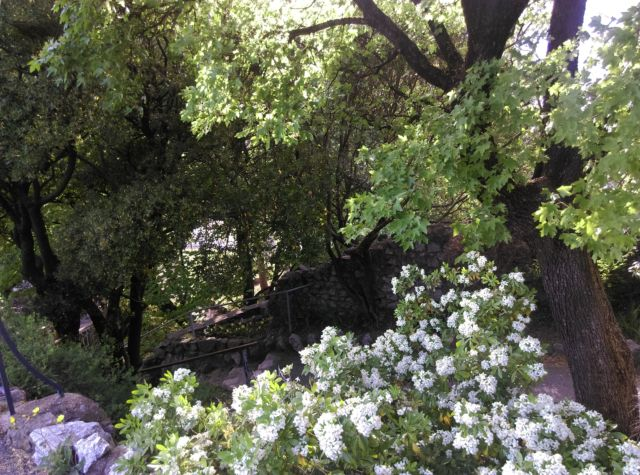 Le Jardin des Dauphins à Grenoble. Depuis plusieurs années, la municipalité a banni l'usage des pesticides pour l'entretien de ses espaces verts. © Florent Mathieu - Place Gre'net