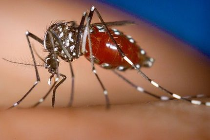 L'ARS appelle à redoubler de vigilance pour lutter contre la prolifération du moustique tigre