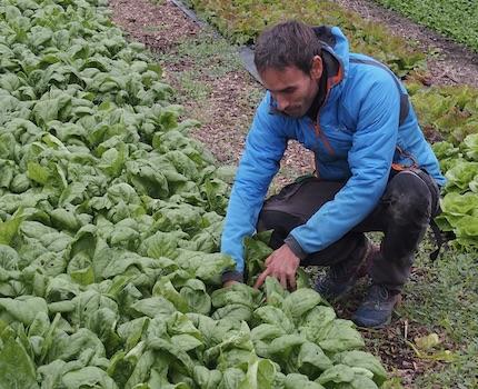 Mickaël Tenailleau est le chef d'exploitation agricole de la ferme depuis son lancement en 2018. © Augustin Bordet -placegrenet.fr