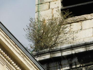 Clocher de l'église Saint-Louis. © Gilles-Marie Moreau