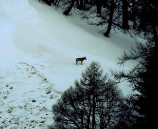 La Région Auvergne Rhône-Alpes a fait retirer son logo des affiches du film Marche avec les loups. Censure politique ? Elle dément aussi l'avoir financé.