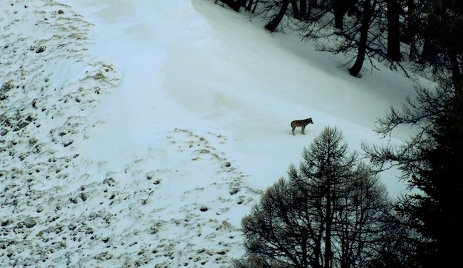Le réalisateur du film Marche avec les loups est le parrain de l'édition 2020 du festival.