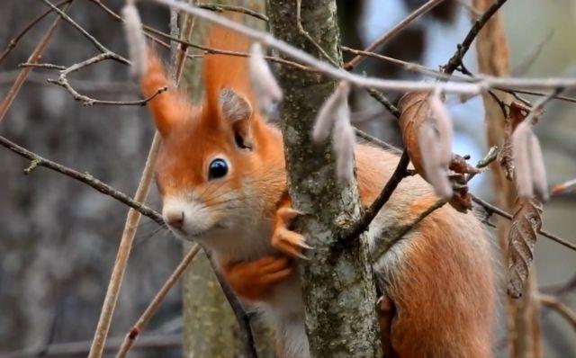 Les écuroducs permettent aux écureuils de pouvoir traverser les routes sans risquer l'écrasement © LPO Isère