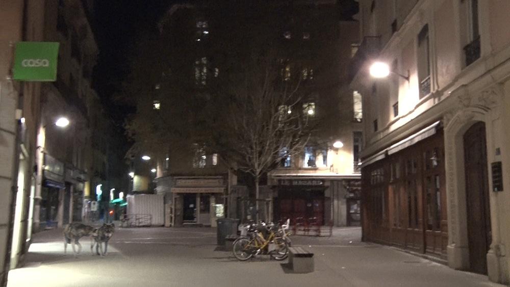 Des loups en plein centre-ville de Grenoble à la faveur du confinement?Quand c'est flou, c'est qu'il y a un loup ? La photographie de deux spécimens près de la Place aux Herbes à Grenoble est troublante © VM