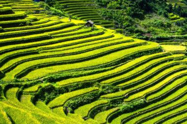 Climat : la part des activités humaines très sous-estimée. Terrasses de riz à Mù Cang Chải au Vietnam. DR