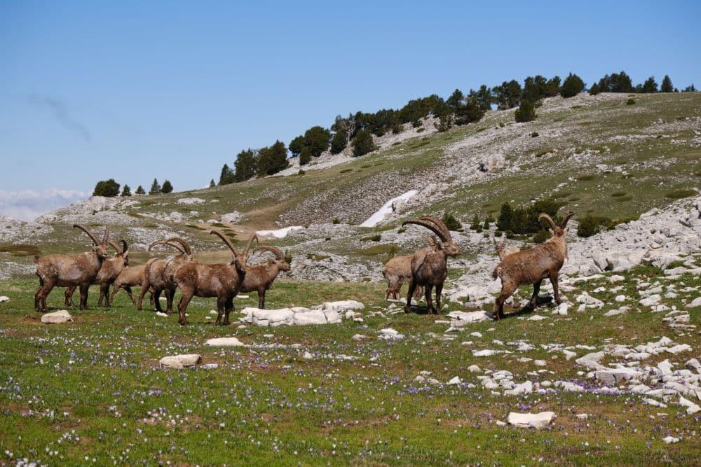 La Réserve naturelle des Haut-Plateaux du Vercors constitue un équilibre à préserver et surveiller © Parc naturel régional du Vercors