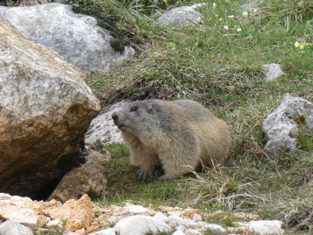 La faune sauvage de la réserve naturelle des Hauts-Plateaux du Vercors est très sensible au dérangement © Parc naturel régional du Vercors