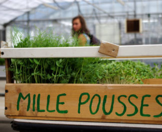 L'association Mille Pousses organisait une visite de son site de production à l'occasion des 48h de l'agriculture urbaine. © Anissa Duport-Levanti