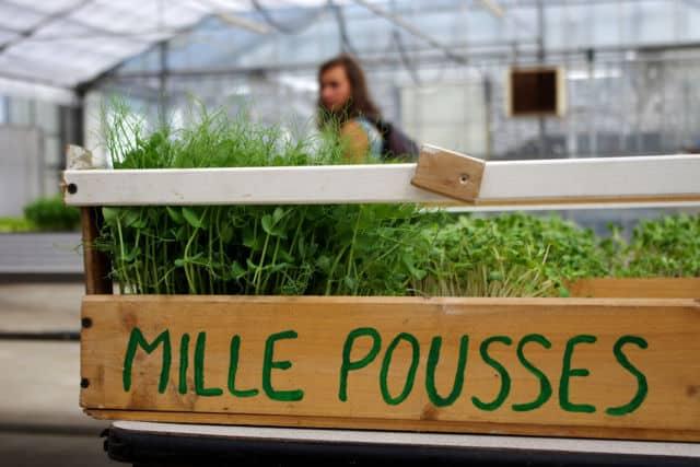 L'association Mille Pousse organisait une visite de son site de production à l'occasion des 48h de l'agriculture urbaine. © Anissa Duport-Levanti