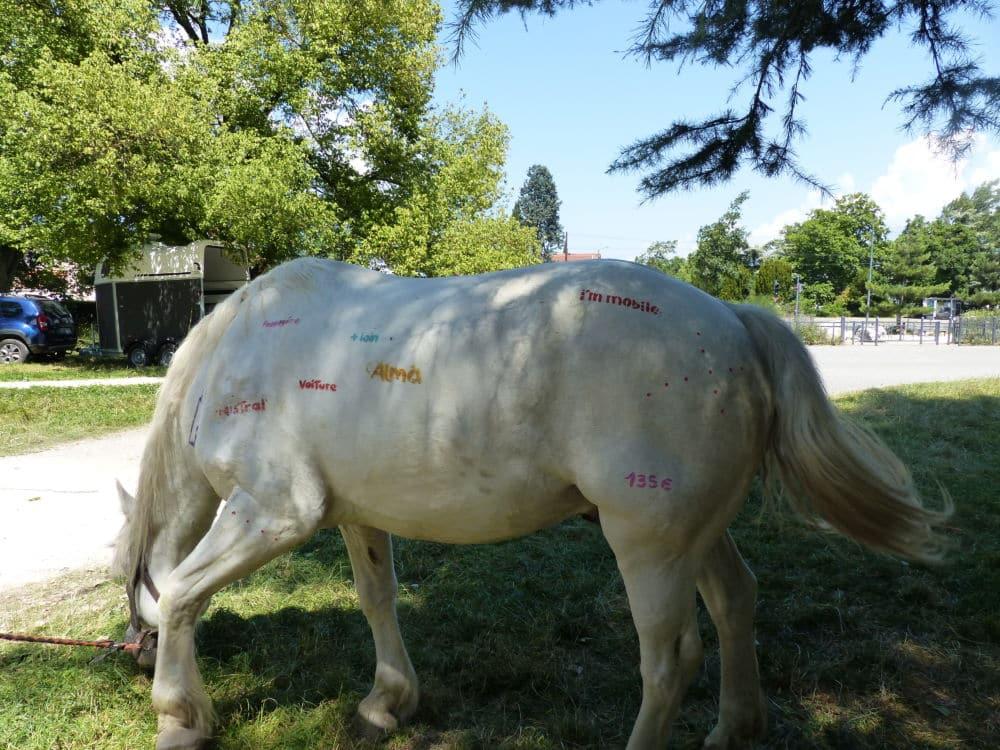 Le cheval Blanco a été support éphémère lors de la fresque participative, parc Bachelard le 24 juin 2020 Cheval projet Rêve parc Bachelard 25 juin 2020 © Léo Aguesse – Place Gre'net