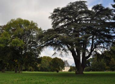 Parc du château de Sassenage