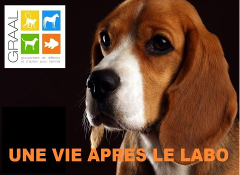 Des Animaux De Laboratoire Proposes A L Adoption Place Gre Net