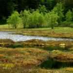 Le travail pour la protection des zones humides, amorcé il y a plus de vingt ans en Isère, se poursuit avec la création de nouveaux secteurs protégés