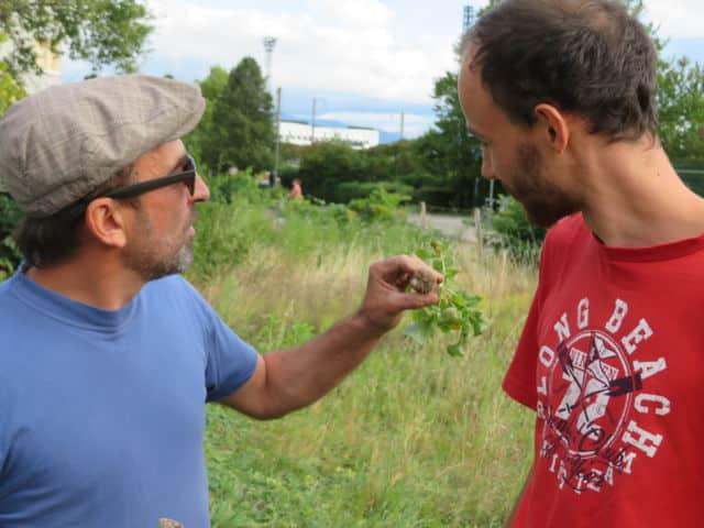 Deux habitants en pleine récolte sur les jardins de la Buisserate. © Tim Buisson - Place Gre'net