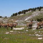 Contrarié par le Covid, l'anniversaire des 50 ans du Parc naturel du Vercors s'étend jusqu'en 2021