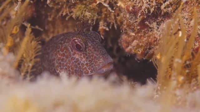 La faune sous-marine est à l'honneur du « conte scientifique » La Cité des mérous sombres