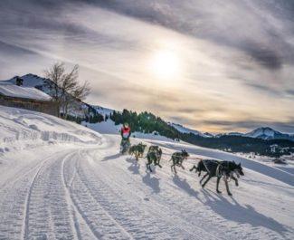 La course de chiens de traineau La Grande Odyssée Savoie-Mont-Blanc aura bien lieu en janvier 2021