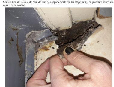 Insalubrité, mal-logement, sous le lino de la salle de bains de l'un des appartements du 1er étage (n°4) du plancher pourri au-dessus du restaurant du jardin de ville. DR