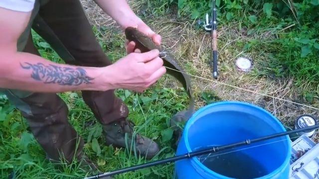 La pêche au vif est d'ores et déjà interdite dans plusieurs pays d'Europe © Paris Animaux Zoopolis