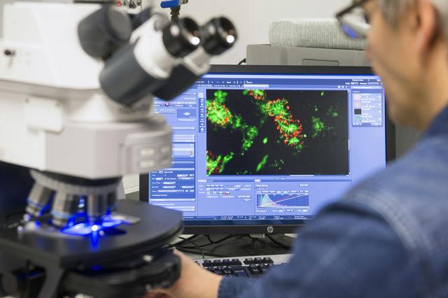 """L'IAB et l'EMBL signent un protocole d'entente pour un programme de recherche autour de la thématique """"Des molécules à l'écosystème"""". © IAB"""