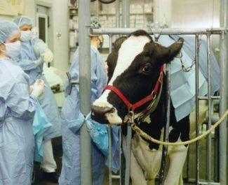 L'Isère enregistre une forte baisse du nombre de vétérinaires en milieu rural