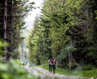 Coureurs dans la forêt