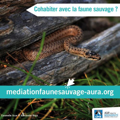 Visuel du site Médiation faune sauvage © LPO Auvergne-Rhône-Alpes