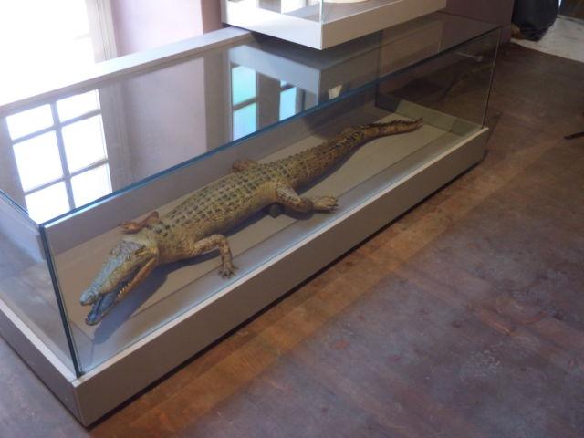 Un crocodile du Nil prêté par le Muséum de Grenoble © Florent Mathieu - Place Gre'net