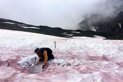 Micro-algues des neiges. Prélèvement dans des neiges couvertes de « sang des glaciers » © Jean-Gabriel VALAY/JARDIN DU LAUTARET/UGA/CNRS