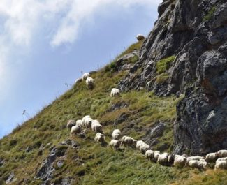 Greenpeace Grenoble... et les agriculteurs de montagne à l'assaut de la PAC