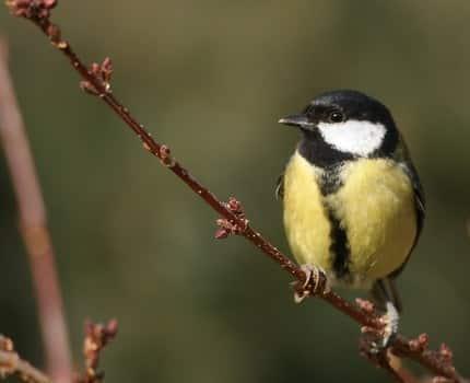 Les populations d'oiseaux en diminution depuis 20 ans, alerte la LPO Auvergne-Rhône-Alpes