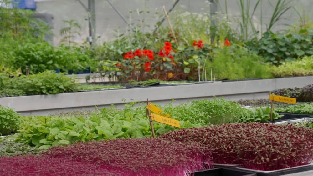 Micro-pousses lors de l'inauguration de la ferme Mille-Pousse le vendredi 9 juillet 2021 (c) Ilan Khalifa--Delclos | Place Gre'net