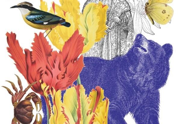 """Dessine moi..."": l'illustration naturaliste s'expose au Muséum de Grenoble jusqu'au 20 mars 2022"