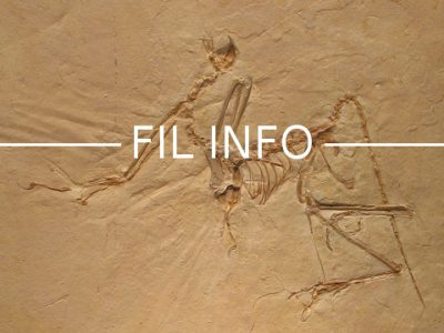 Archaeopteryx-Fil-Info