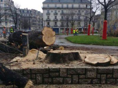 Plusieurs arbres étaient coupés ce 28 janvier 2021 place Victor-Hugo. © Émilie Chalas