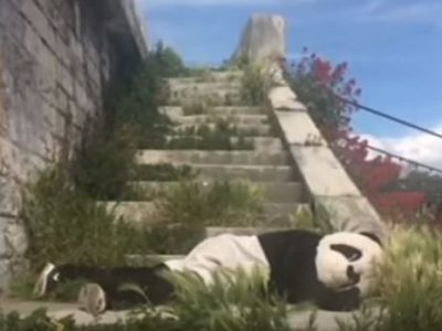 Panda Rocktambule. Pôle musical d'innovationDR