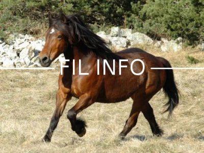 Fil Info Cheval du Vercors de Barraquand