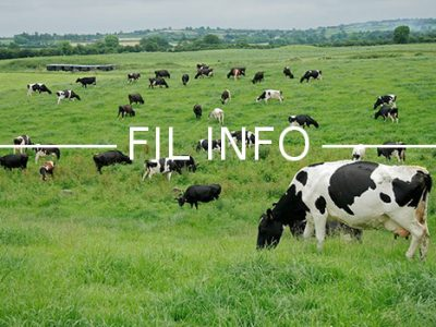 Fil Info agriculture champ vaches herbe nature