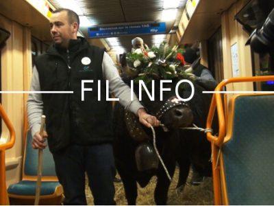 Une vache s'est invitée gratuitement – pic de pollution oblige – à bord d'une rame de tramway ce mardi 13 décembre en début de soirée à Grenoble. © Joël Kermabon - Place Gre'net