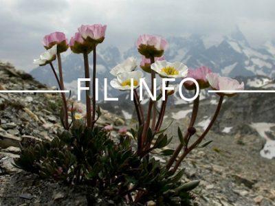 Les Alpes françaises verdissent. Et les plantes de haute altitude sont parmi les grandes bénéficiaires du réchauffement climatique.