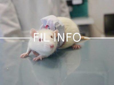 Le laboratoire grenoblois TIMC-IMAG a développé un gilet avec capteurs pour animaux de laboratoire, breveté et bientôt disponible grâce à Etisense.