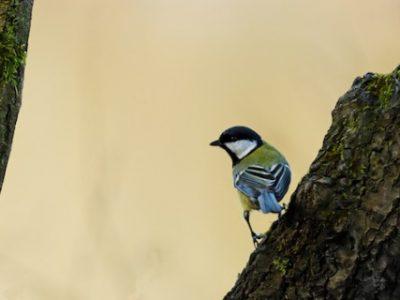 Oiseaux migrateurs et ligue de protection des oiseaux. © LPO/Thomas Cugnod