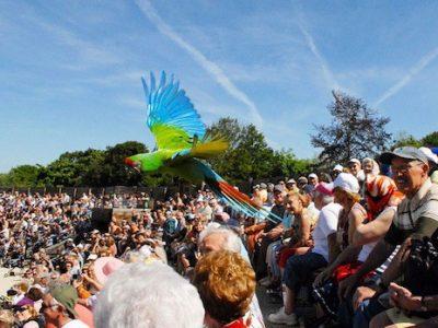 Parc des Oiseaux Villars les Dombes. Sortie famille, été. Spectacle marabout. © Patricia Cerinsek - placegrenet.fr