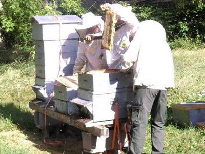 Récole de miel 8 aout 2019 Grenoble UNE