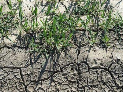 En Isère, la sécheresse s'aggrave sur les cours d'eau et les nappes phréatiques. Les pouvoirs publics multiplient, en vain, les mesures de restriction.