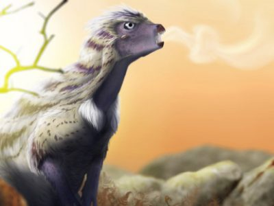 Illustration d'un Heterodontosaurus tucki, l'un des dinosaures sud-africains. © Radermacher et al.