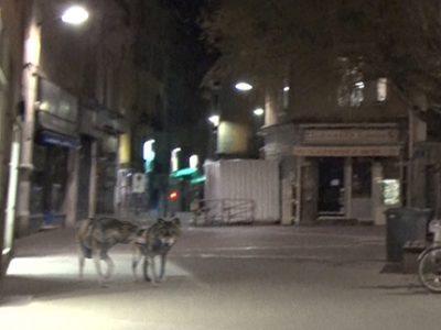 UNE-Loups-Grenoble